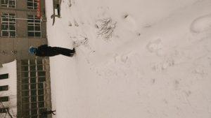 哈尔滨暴雪 20191229插图
