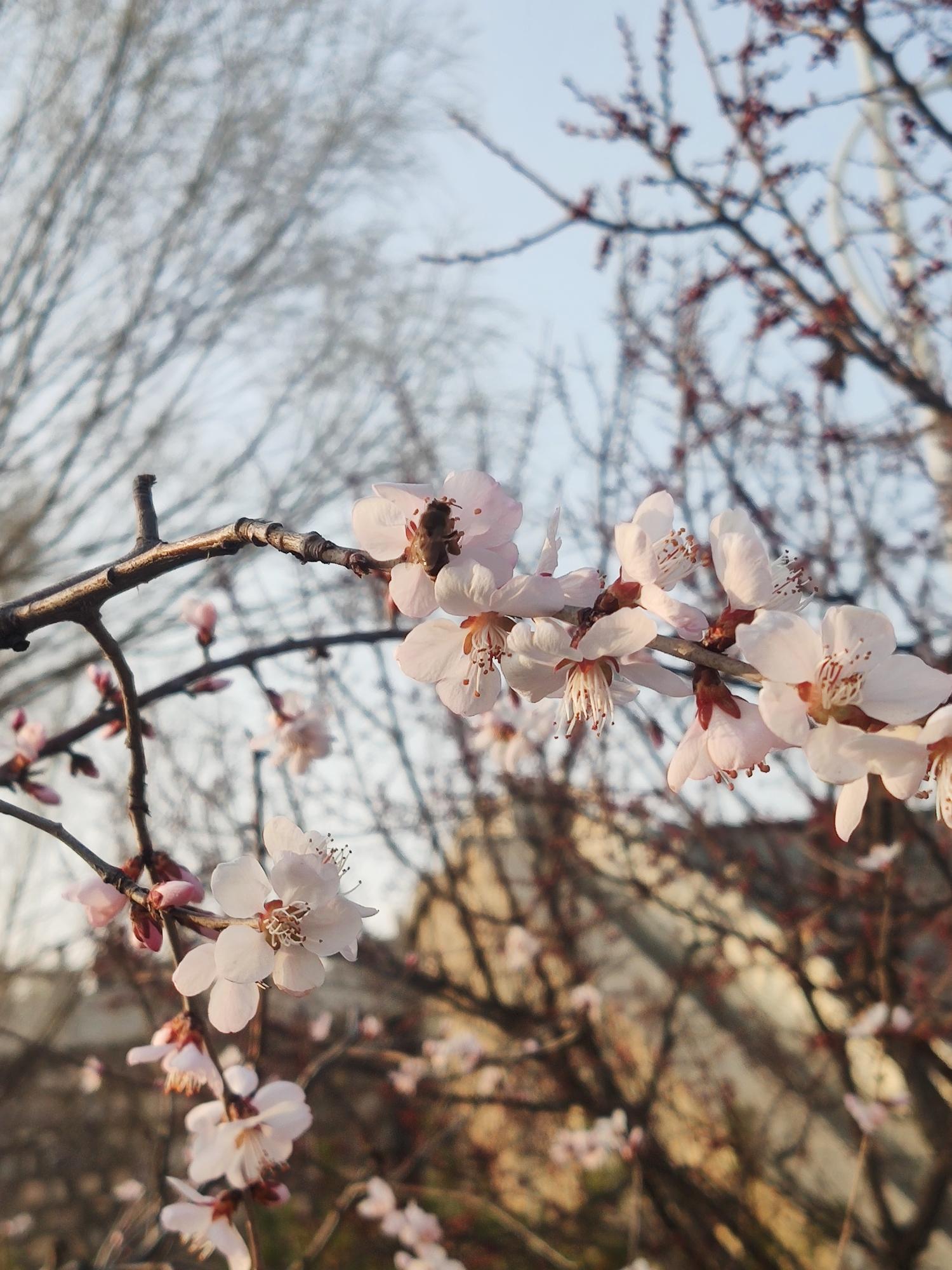 春暖,花开插图